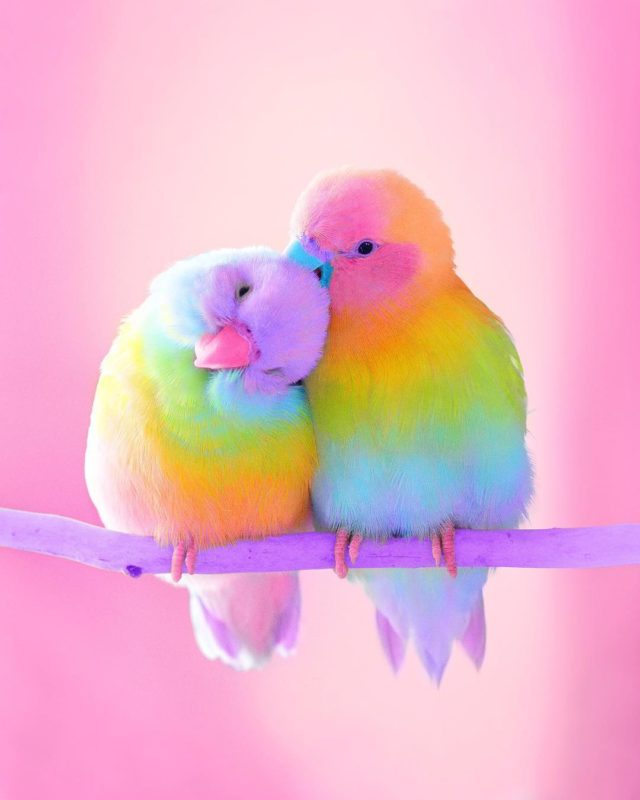 #candyminimal: Ramzy Masri Turns The World Into a Rainbow Paradise