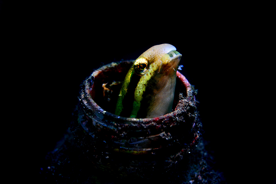 Beauty Underwater Macro Photography by Alexis Golding 1 Meet the Strange Underwater Inhabitants of Indonesia's Lembeh Strait