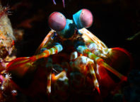Meet the Strange Underwater Inhabitants of Indonesia's Lembeh Strait