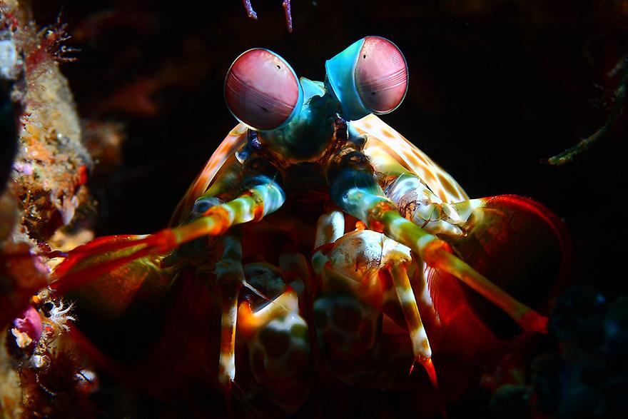 Meet the Strange Underwater Inhabitants of Indonesia's Lembeh Strait