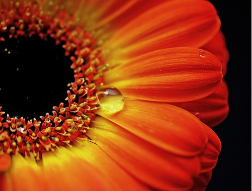 Beautiful Macro Photography Shots 10 25 Macro Photography Shots That Make You Amazed