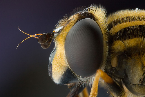 Beautiful Macro Photography Shots 20 25 Macro Photography Shots That Make You Amazed