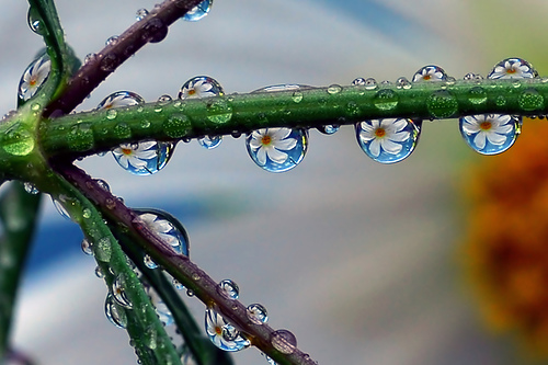Beautiful Macro Photography Shots 21 25 Macro Photography Shots That Make You Amazed