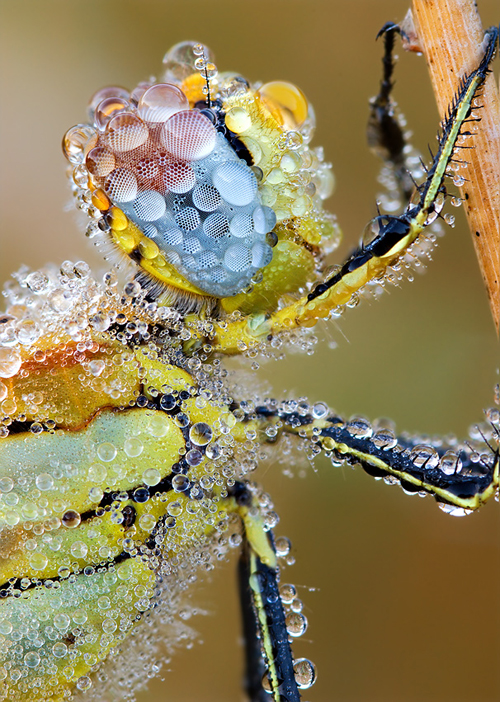 Beautiful Macro Photography Shots 25 25 Macro Photography Shots That Make You Amazed