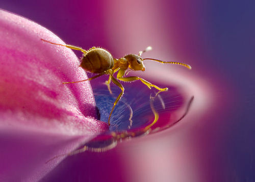 Beautiful Macro Photography Shots 5 25 Macro Photography Shots That Make You Amazed