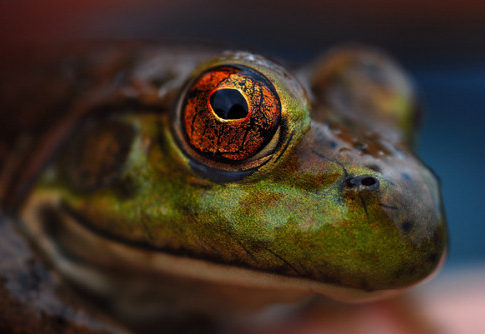 25 Macro Photography Shots That Make You Amazed