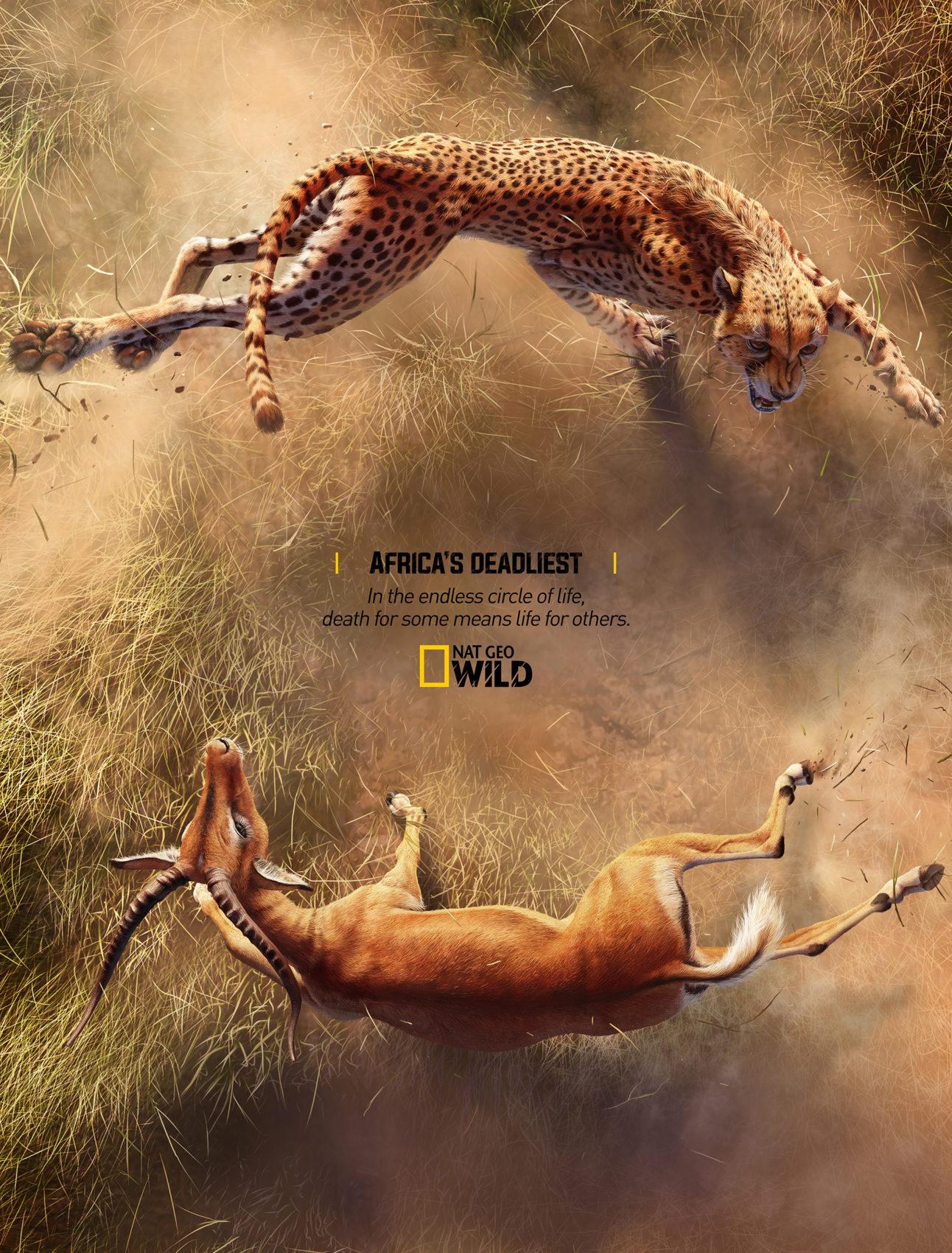 Creative Concept for Africa's Deadliest Face to Face Predator vs Prey 2