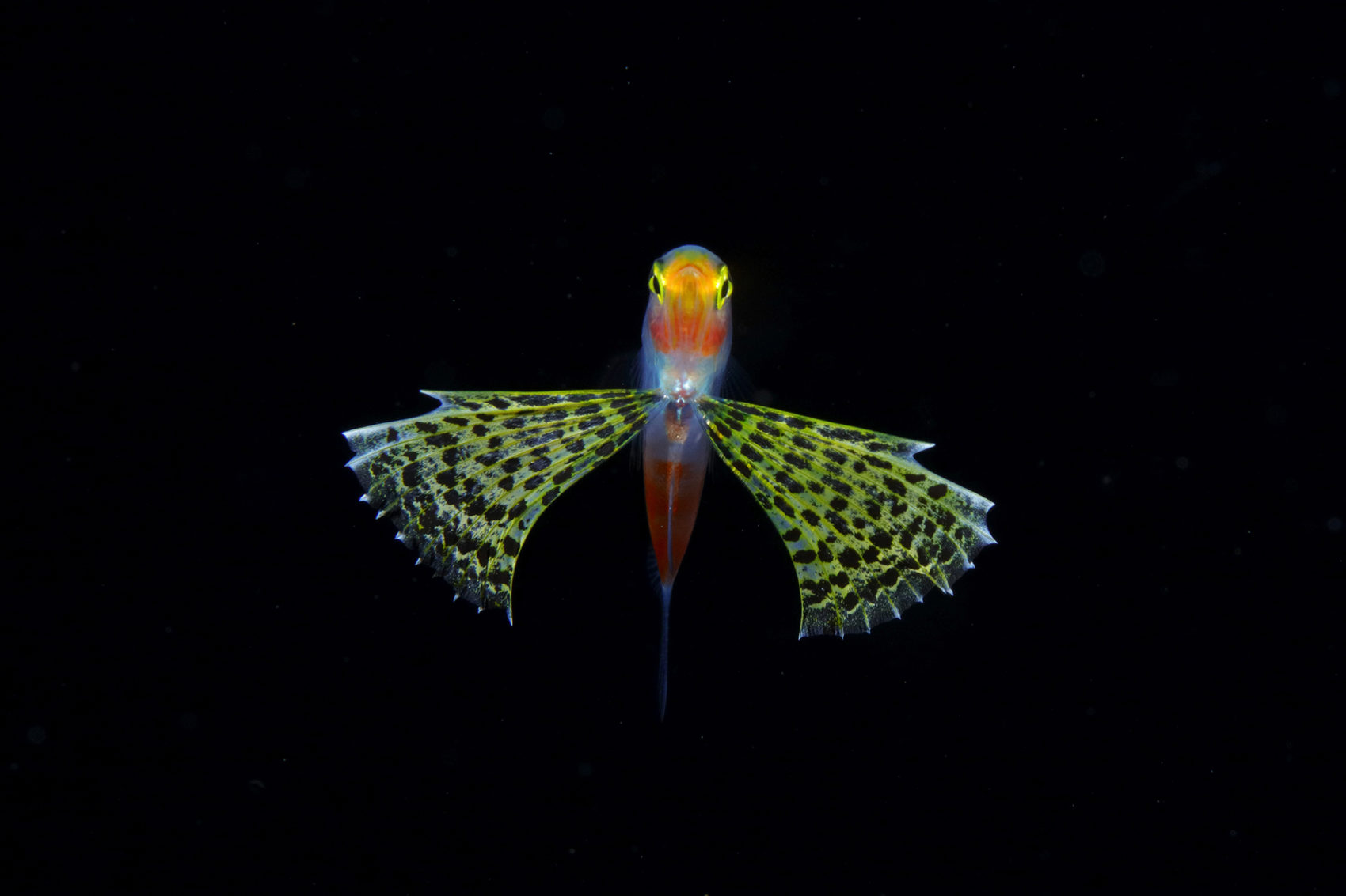 Jewels in the Night Sea RyoMinemizu 1 Luminous Plankton Captured in the Dark Waters of the Osezaki Sea