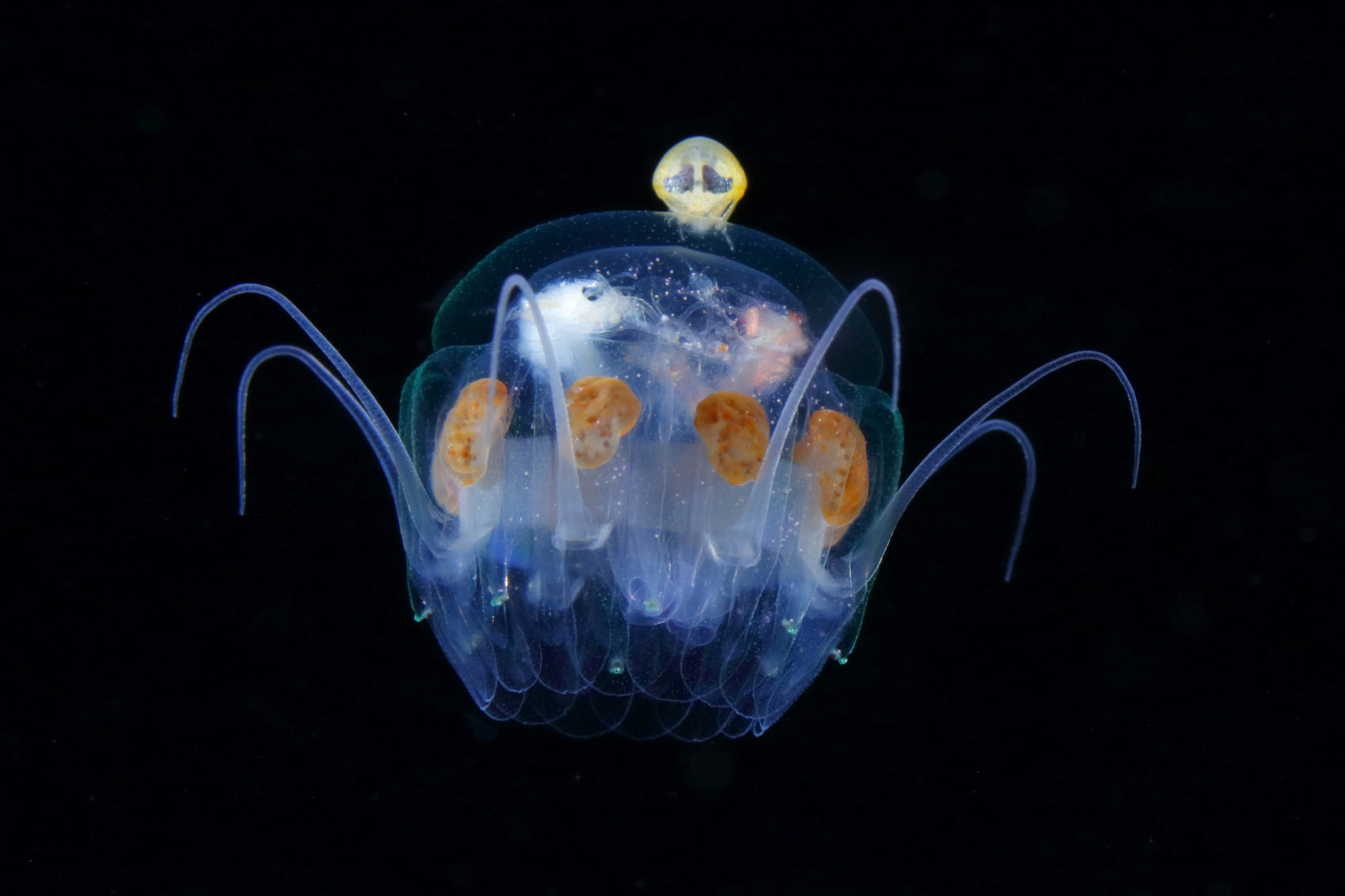 Jewels in the Night Sea RyoMinemizu 5 Luminous Plankton Captured in the Dark Waters of the Osezaki Sea