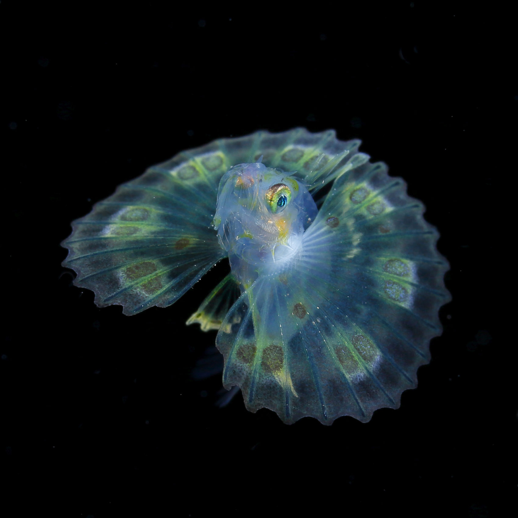 Jewels in the Night Sea RyoMinemizu Luminous Plankton Captured in the Dark Waters of the Osezaki Sea