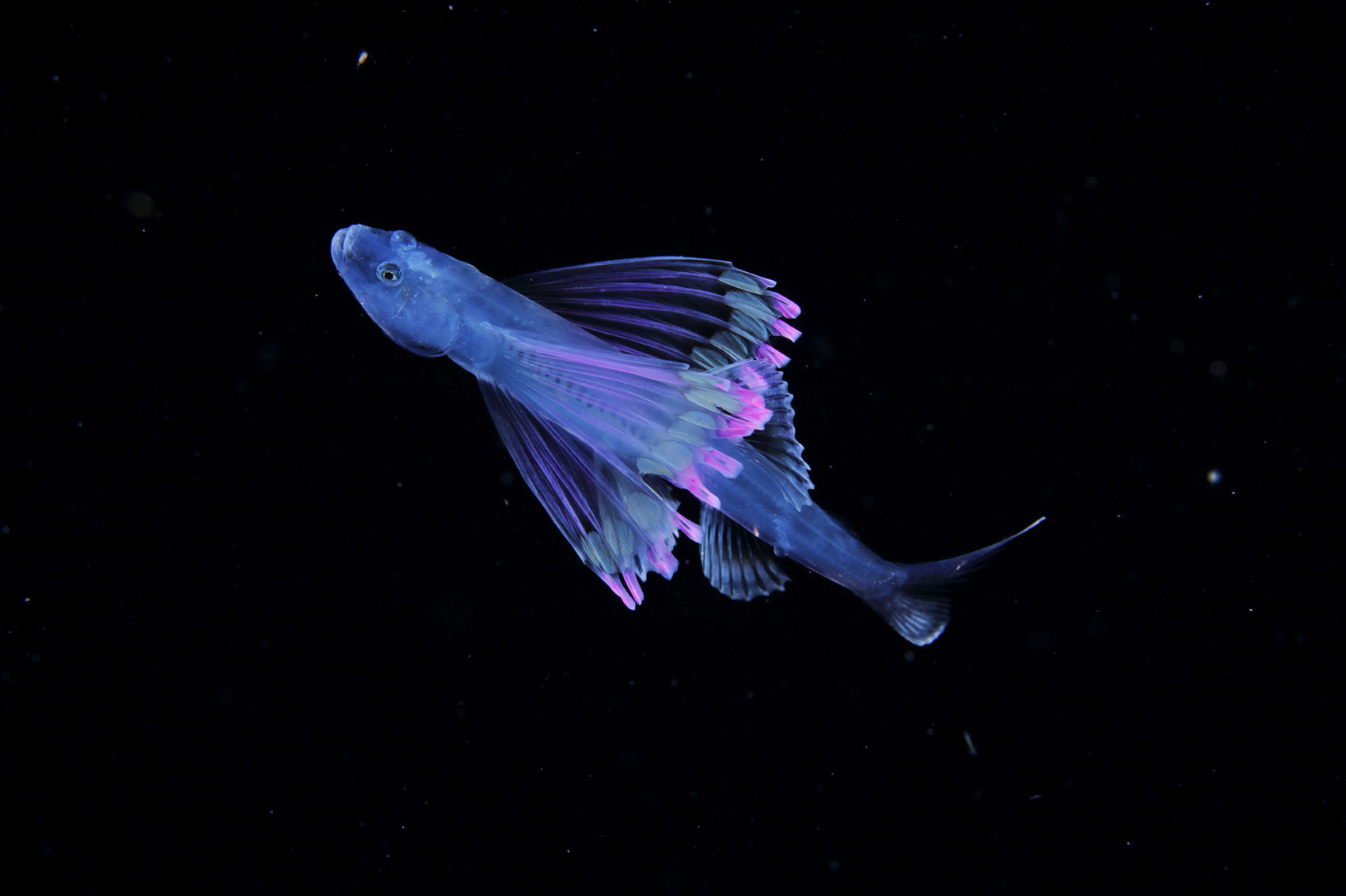 Luminous Plankton Captured in the Dark Waters of the Osezaki Sea