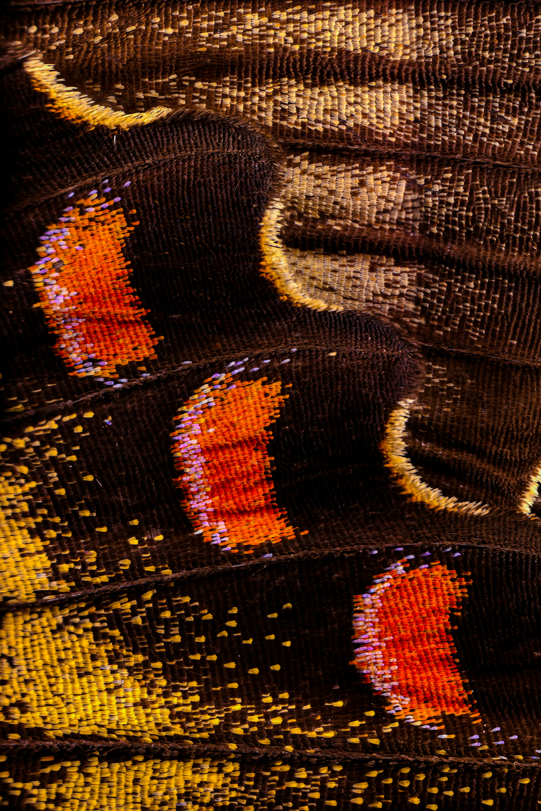Macro photo of butterfly wing 24 2 full butterfly Wonderful Macro Photography of Butterflies Wing by Chris Perani