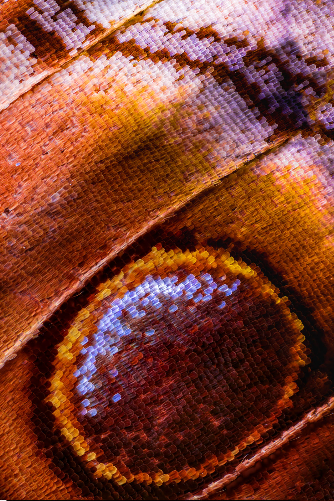 Macro photo of butterfly wing 31 Wonderful Macro Photography of Butterflies Wing by Chris Perani
