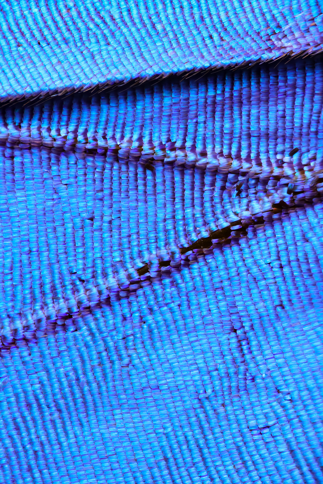 Macro photo of butterfly wing 64 Wonderful Macro Photography of Butterflies Wing by Chris Perani