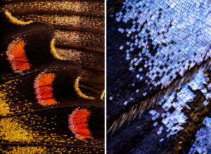 Wonderful Macro Photo of Butterflies Wing