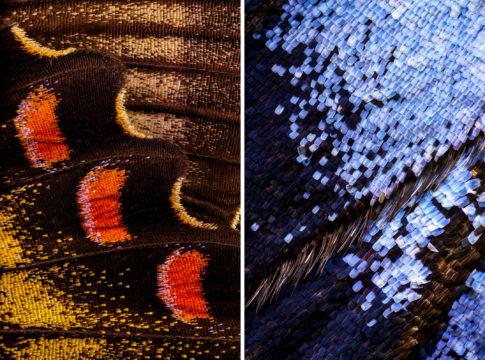 Wonderful Macro Photo of Butterflies Wing