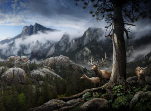 Wonderful Photographs Between Idealization and Realism by Nick Pedersen
