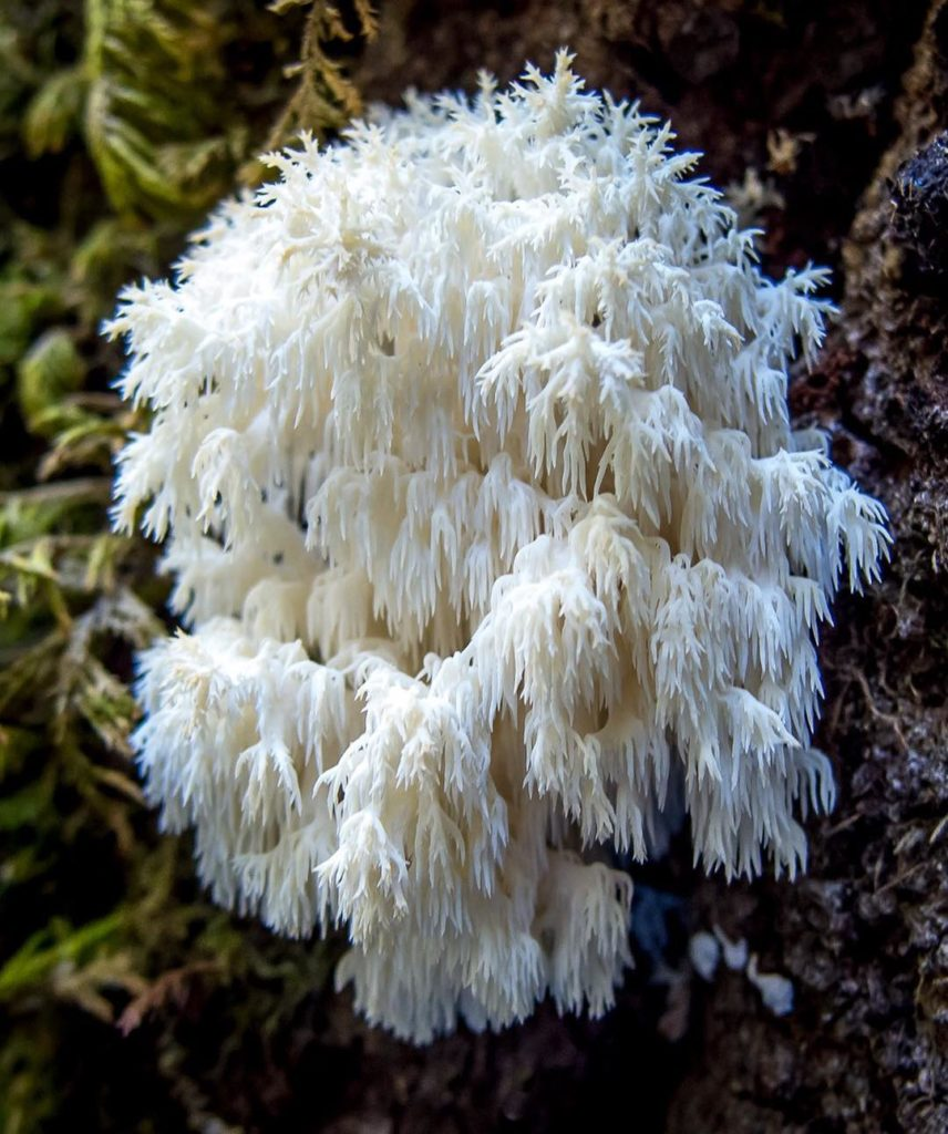Fascinating Fungi of Northern California by Alison Pollack 1 856x1024 Fascinating Fungi of Northern California by Alison Pollack