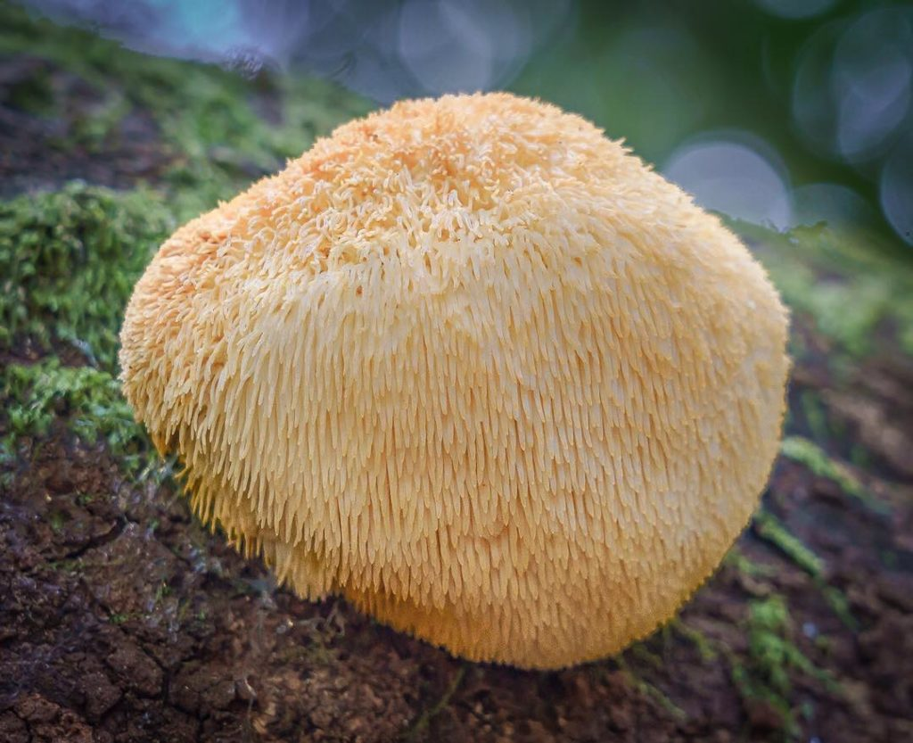 Fascinating Fungi of Northern California by Alison Pollack 4 1024x833 Fascinating Fungi of Northern California by Alison Pollack