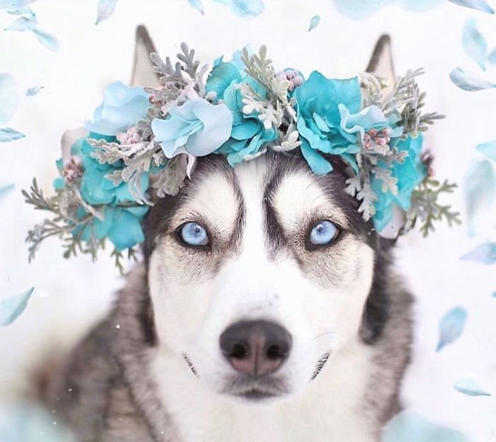 Cute Flower Crowns For Animals 1 This Artist Is Making Flower Crowns For Animals And They Look Majestic