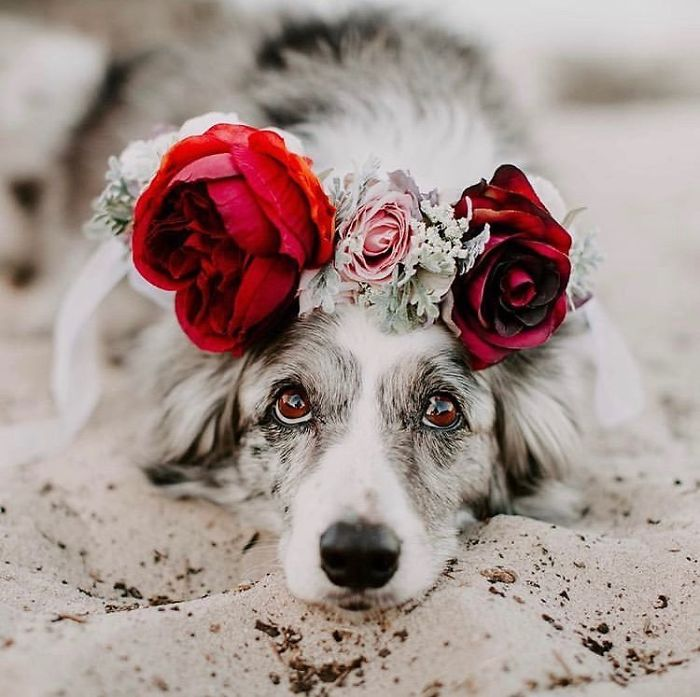 Cute Flower Crowns For Animals 10 This Artist Is Making Flower Crowns For Animals And They Look Majestic