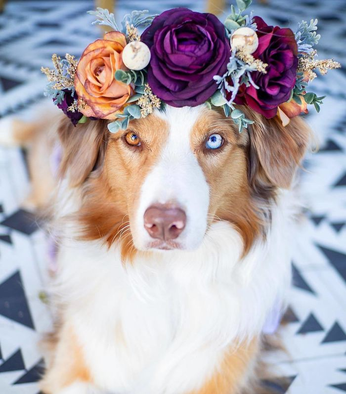 Cute Flower Crowns For Animals 11 1 This Artist Is Making Flower Crowns For Animals And They Look Majestic