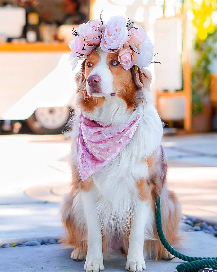 Cute Flower Crowns For Animals 12 1 This Artist Is Making Flower Crowns For Animals And They Look Majestic