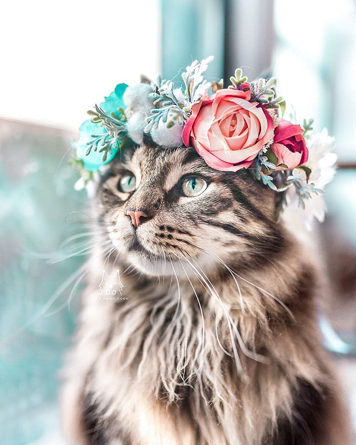 Cute Flower Crowns For Animals 13 This Artist Is Making Flower Crowns For Animals And They Look Majestic