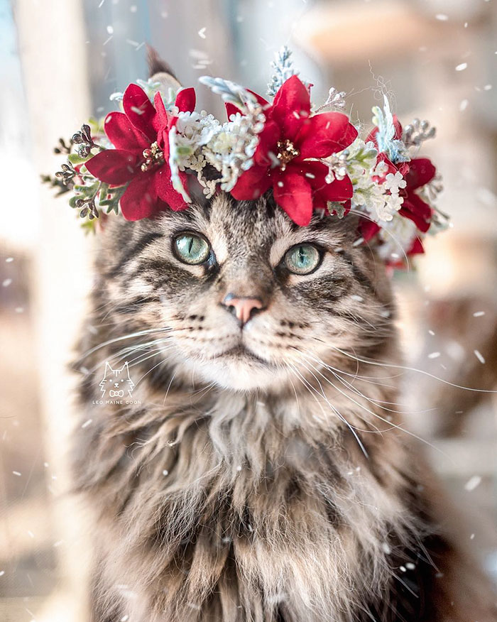 Cute Flower Crowns For Animals 3 This Artist Is Making Flower Crowns For Animals And They Look Majestic