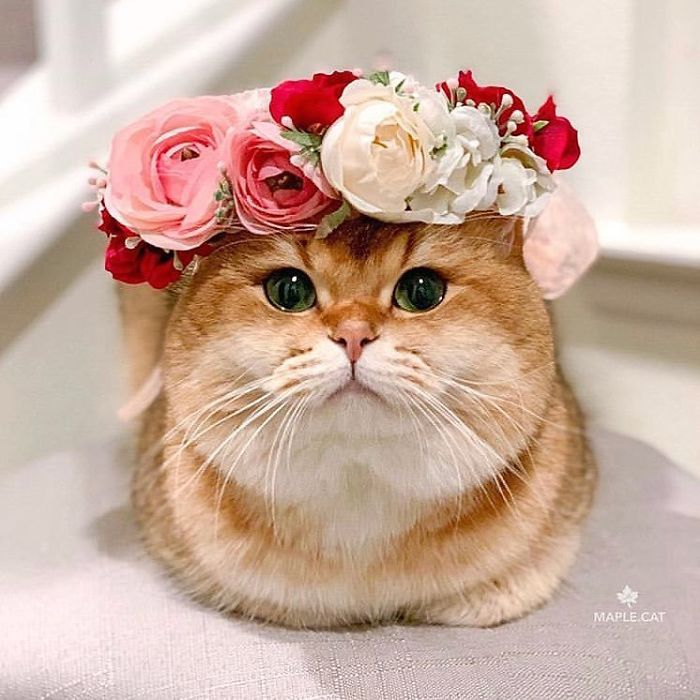 Cute Flower Crowns For Animals 4 This Artist Is Making Flower Crowns For Animals And They Look Majestic