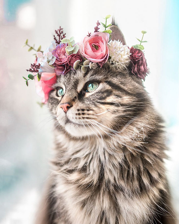 Cute Flower Crowns For Animals 5 This Artist Is Making Flower Crowns For Animals And They Look Majestic