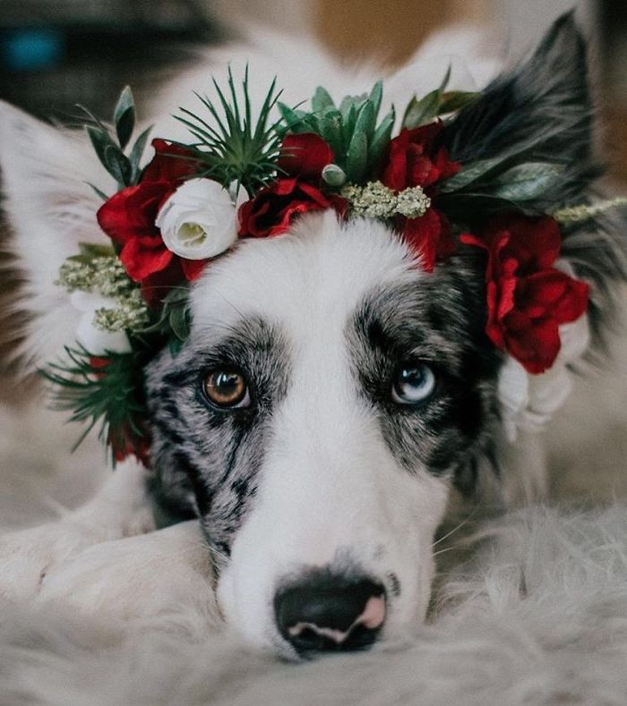 Cute Flower Crowns For Animals 7 This Artist Is Making Flower Crowns For Animals And They Look Majestic