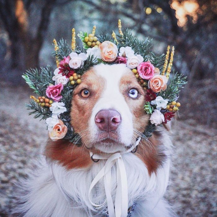 Cute Flower Crowns For Animals 8 This Artist Is Making Flower Crowns For Animals And They Look Majestic