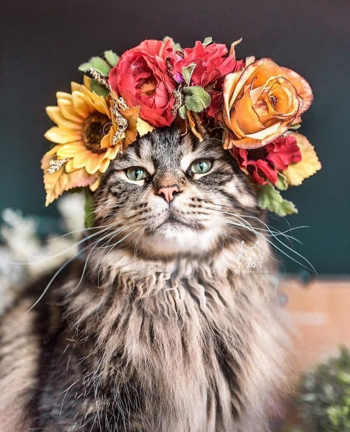 Cute Flower Crowns For Animals 9 This Artist Is Making Flower Crowns For Animals And They Look Majestic