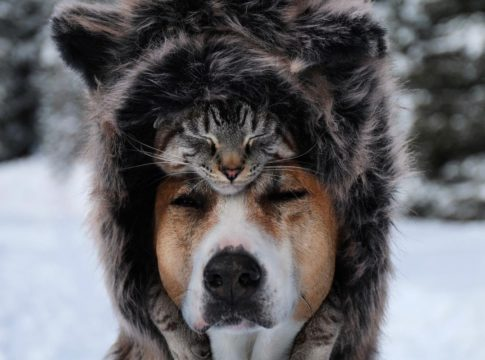 Cute and Amazing Dog and Cat Travel Companions